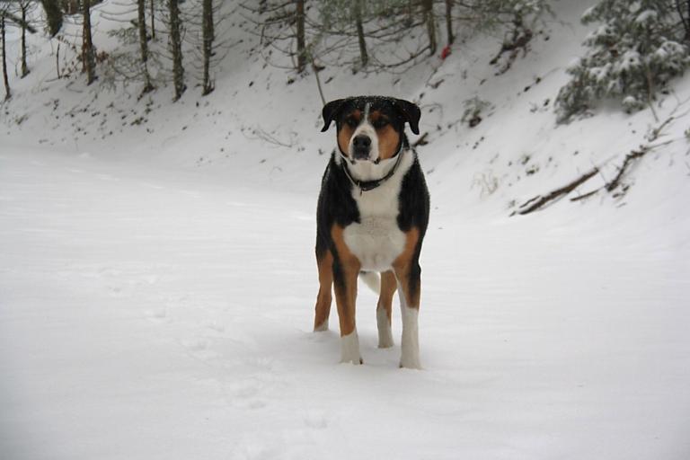 Hofhund Gino